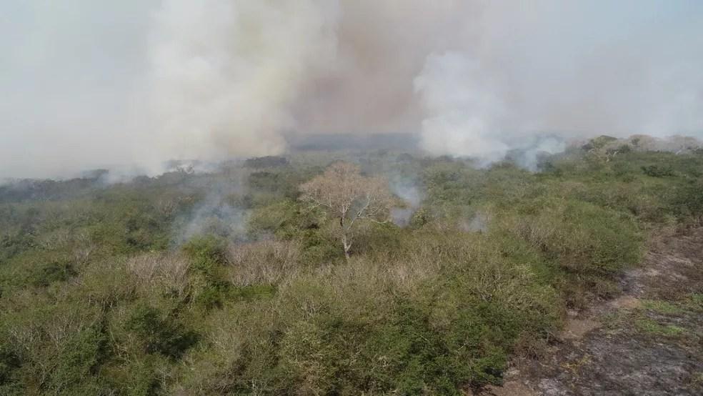Área queimada em Corumbá, no Pantanal sul-mato-grossense, em julho deste ano — Foto: Corpo de Bombeiros/Divulgação