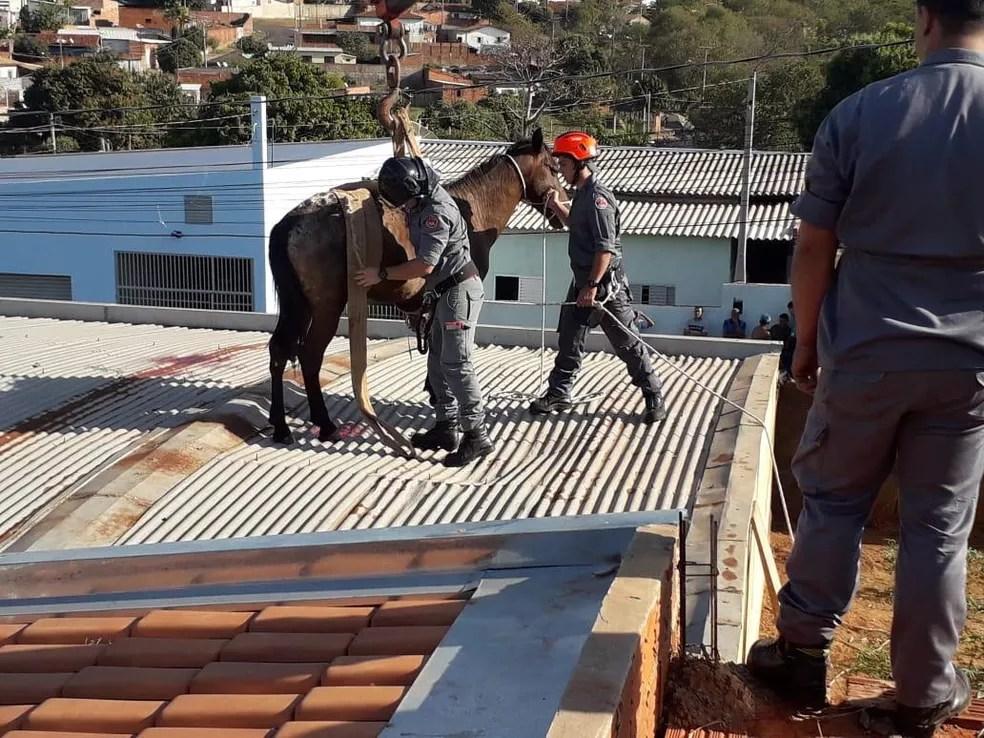 Cavalo sobe em telhado e resgate mobiliza Corpo de Bombeiros no interior de SP — Foto: J. Serafim/Divulgação