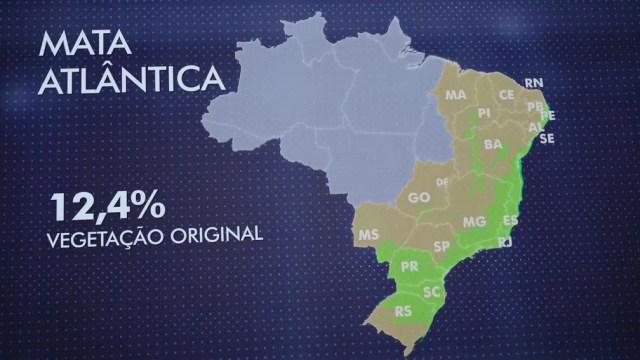 Pedaços da Mata Atlântica ainda existem em 17 estados, nas regiões Sul, Sudeste, Centro-Oeste e Nordeste. — Foto: Reprodução/TV Globo