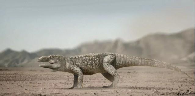 'Não tem relação com as aves nem com os dinossauros, mas está na linhagem que deu origem aos crocodilos', explica pesquisador — Foto: Divulgação