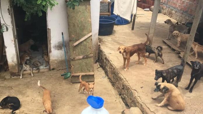 Cães ficam espalhados por todos os cantos da casa — Foto: Alan Alves/G1