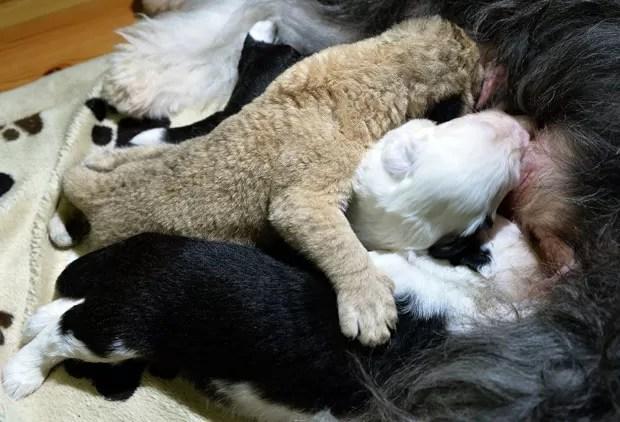Felino foi abandono por seus pais e acabou adotado pela cadela  (Foto: Janek Skarzynski/AFP)