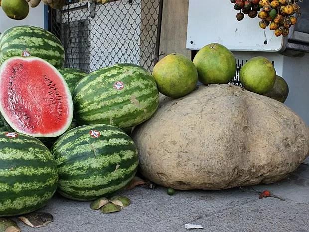 Além da batata, laranjas em tamanho grande também nasceram no sítio de Dona Rosa (Foto: Leandro Tapajós/G1 AM)