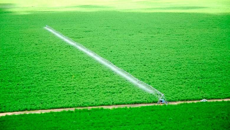 Resultado de imagem para irrigação produtividade