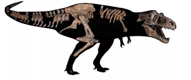 """Arte mostra partes de ossos do dinossauro encontrado no Canadá — Foto: AFP PHOTO / UNIVERSITY OF ALBERTA / AMANDA KELLEY"""""""