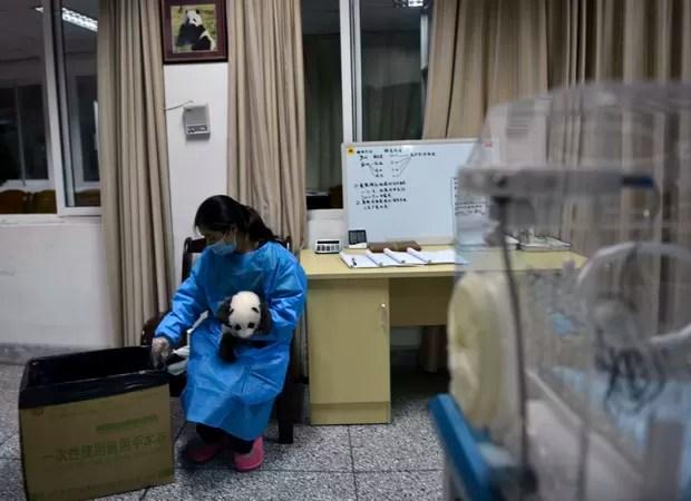 Cientista segura filhote de panda em centro de reprodução de Chengdu, na China (Foto: AP)