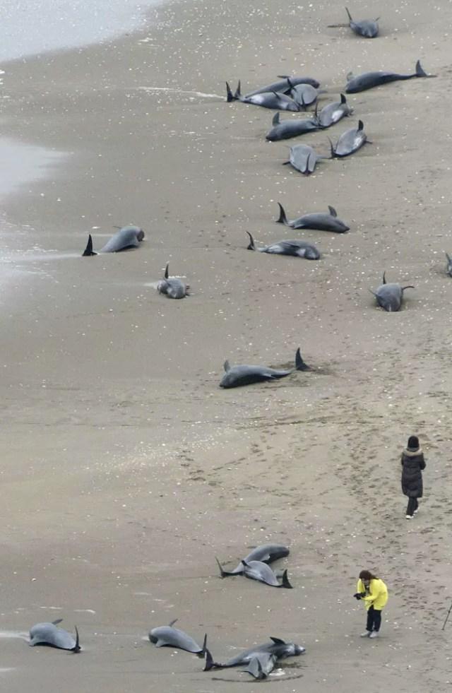 Golfinhos são vistos em praia em Hokota nesta sexta-feira (10); cerca de 150 foram encontrados na areia (Foto: Kyodo/AP)