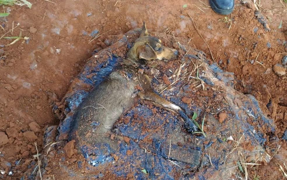 Animal foi retirado da poça sem ferimentos — Foto: Corpo de Bombeiros/Divulgação