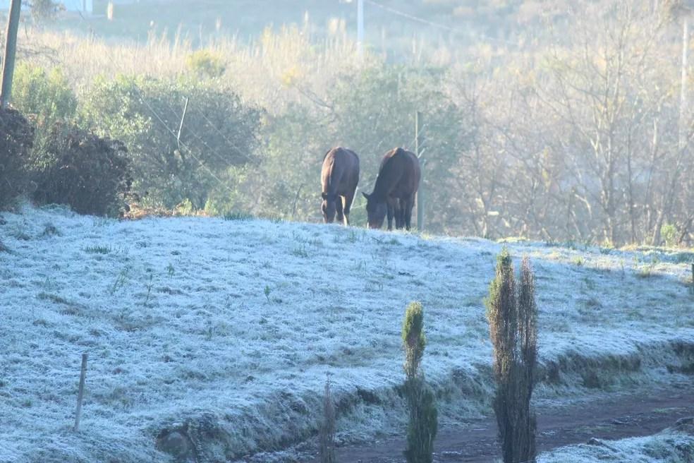 Cavalos percorrem pasto congelado em São Joaquim (Foto: Mariana Waltrick/OnJack)