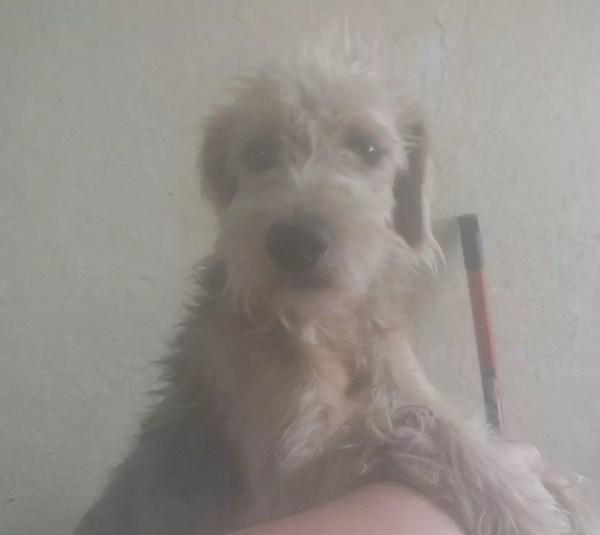 Casal de Araçatuba (SP) muda de casa e abandona cachorro  (Foto: Andreia de Sousa Oliveira)