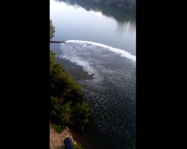 Efluentes foram despejados no Rio Cuiabá — Foto: Reprodução