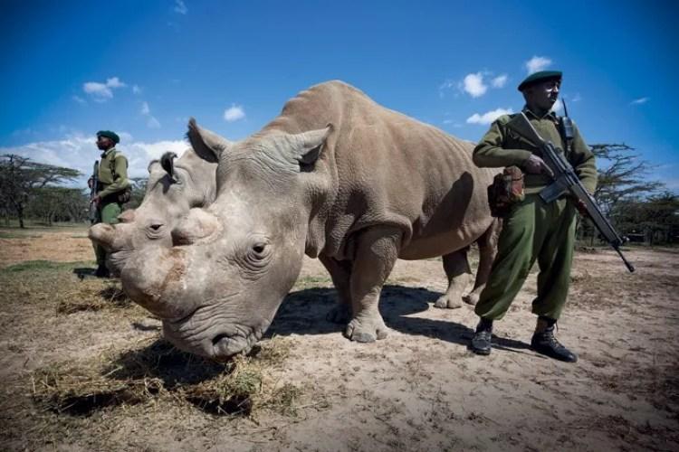 Sudan era protegido por soldados (Foto: Divulgação)