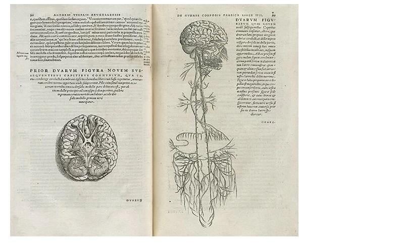 Ele foi escrito por Andreas Vesalius, um professor da Universidade de Pádua (Foto: biblioteca britânica)