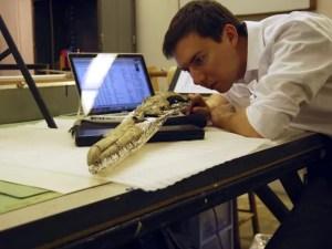 Pesquisador Daniel Ksepka estuda crânio de ave 'Pelagornis sandersi', identificada como a maior do mundo (Foto: AP Photo/Courtesy Daniel Ksepka via Bruce Museum)