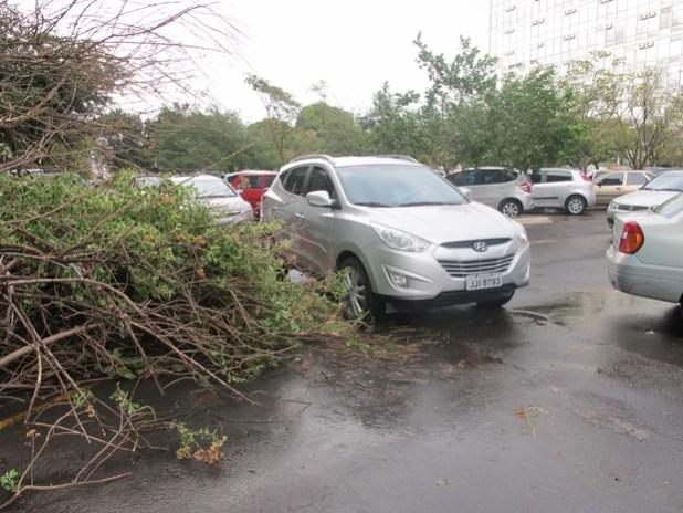 Árvore caída próxima ao Ministério do Planejamento atrapalha trânsito (Foto: Lucas Salomão/G1)
