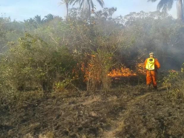 Equipes permanecem no local e tentam extinguir os focos que ainda restam (Foto: Divulgação/Corpo de Bombeiros Militares)
