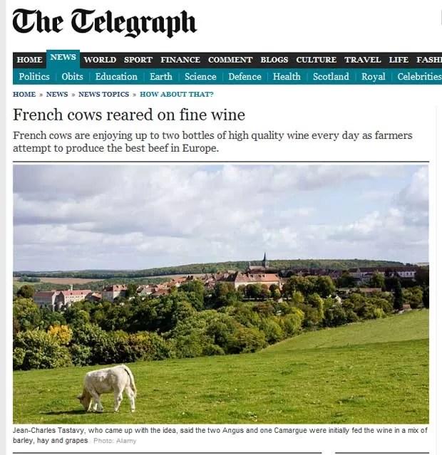 """Reportagem do """"Telegraph"""" comenta criação de gado com vinho na França (Foto: Reprodução)"""
