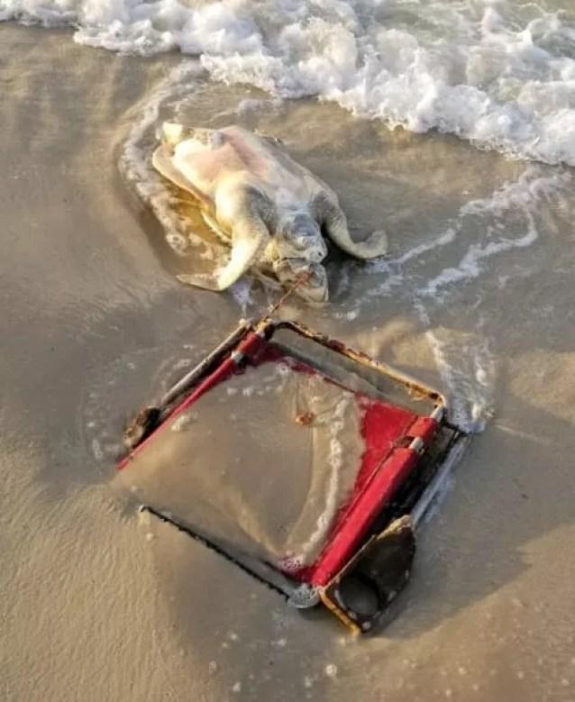 Animal morreu sufocado após ficar preso na cadeira  (Foto: Reprodução/ Share The Beach )