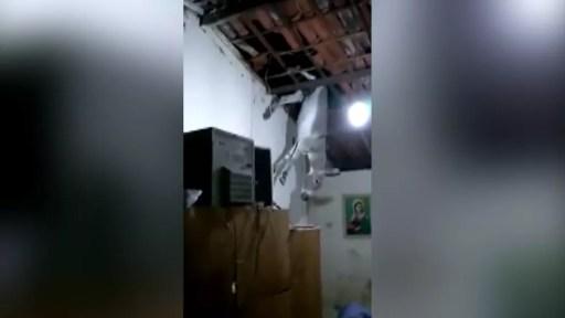 Resultado de imagem para Jumento cai em cozinha após subir no telhado