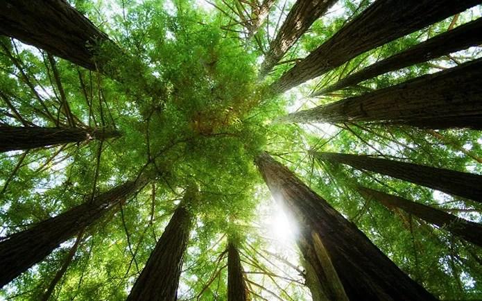 Fique em paz com a natureza otimizando as impressões (Foto: Reprodução/ papeisdeparedehd)