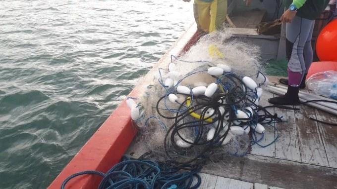 Rede que estava presa a filhote de baleia-franca em Garopaba (Foto: Associação R3 Animal/Divulgação)
