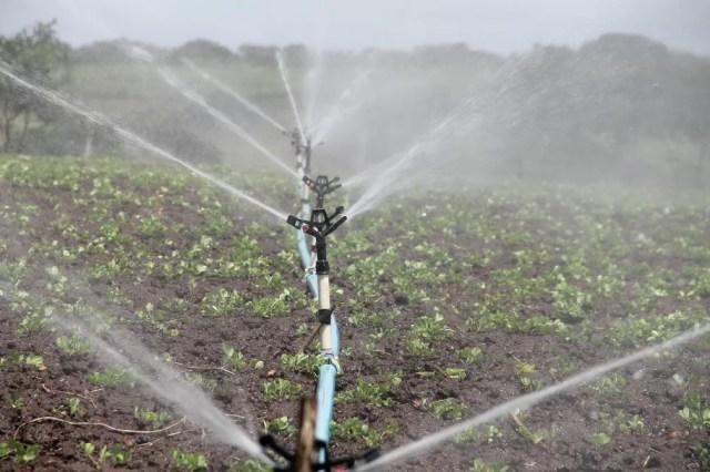 Produção agrícola é a que mais gasta água no mundo — Foto: Pixabay