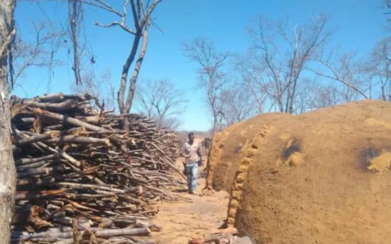 Inema faz operação de combate ao desmatamento — Foto: Inema/Divulgação