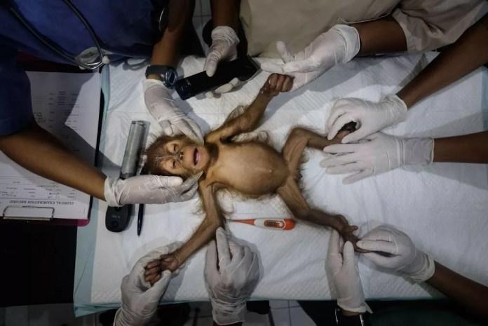 Salvando orangotangos  — Foto: Alain Schroeder / TNC Photo Contest 2021