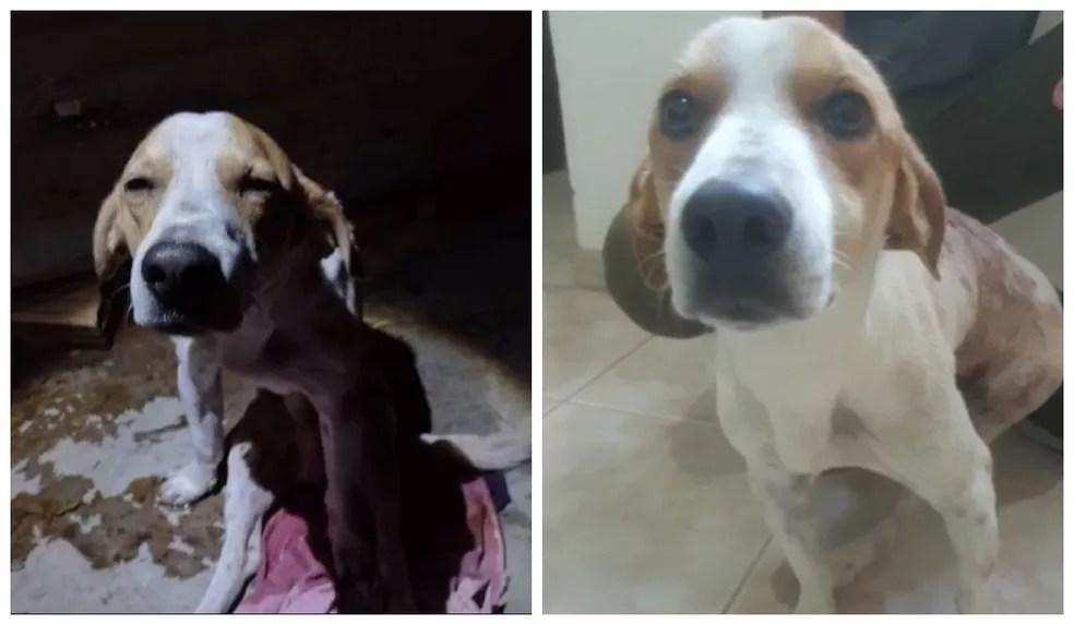 Fofinho quando foi socorrido e após ser atendido na clínica veterinária — Foto: Valmintas Souza e Caio Rabelo/Montagem G1