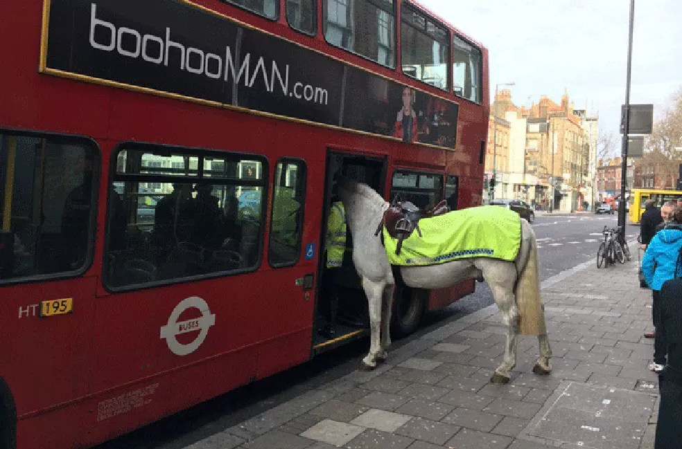 Cavalo da polícia, Invictor estava a serviço  (Foto: Simon Crowcroft /Twitter)