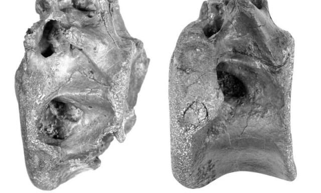 Nova espécie de dinossauro descoberta na Ilha de Wight (Foto: Universidade de Southampton)