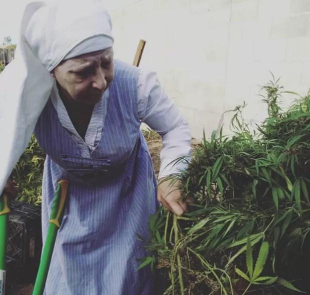 Irmã Kate ajudando no cultivo da maconha (Foto: Reprodução Instagram)
