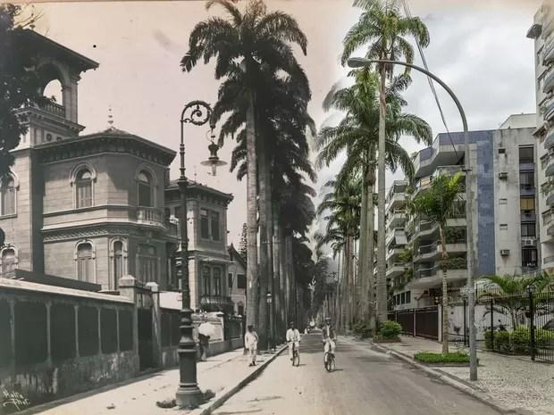 Rua Paissandu, em Laranjeiras, com suas palmeiras imperiais (Foto: Augusto Malta e Marcello Cavalcanti / Divulgação)