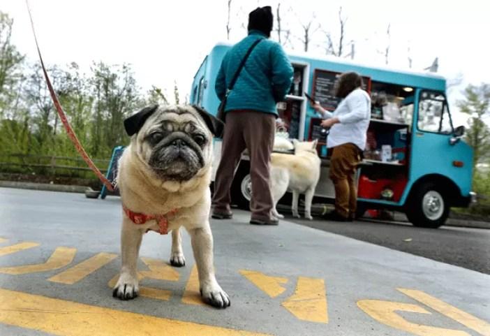 Cidade dos EUA tem food truck especializado em comida de cachorro (Foto: Ted S. Warren/AP)