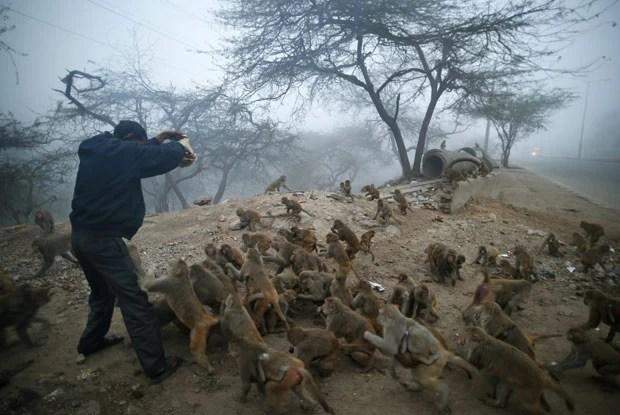 Macacos cercaram devoto hindu para ganhar biscoitos (Foto: Saurabh Das/AP)
