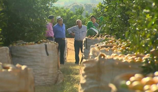 Alta na safra da laranja gerou demanda por empregos na lavoura em Bebedouro, SP (Foto: Reprodução/EPTV)