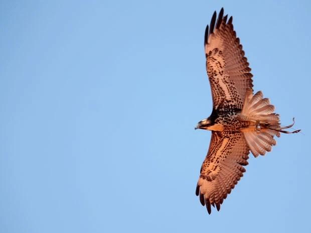 Falcões e gaviões competem neste final de semana; voo livre está entre as categorias (Foto: Joacil Germano)