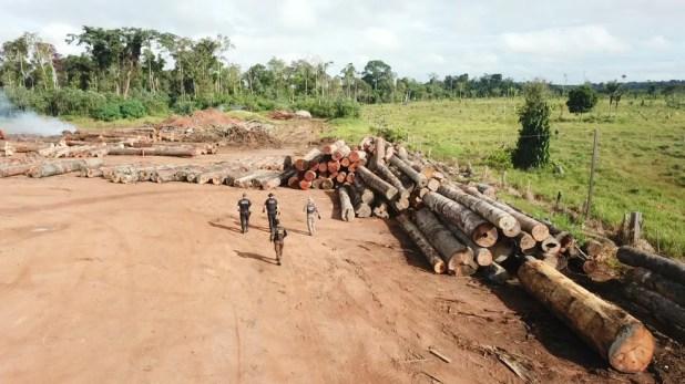 Foto aérea mostra madeiras extraídas em terras da União, em RO — Foto: PF/Divulgação