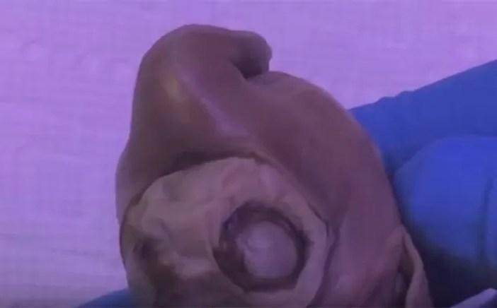 Criatura foi entregue a dono de show de horrores em Venice Beach. (Foto: Reprodução/YouTube/Venicebeachfreakshow)
