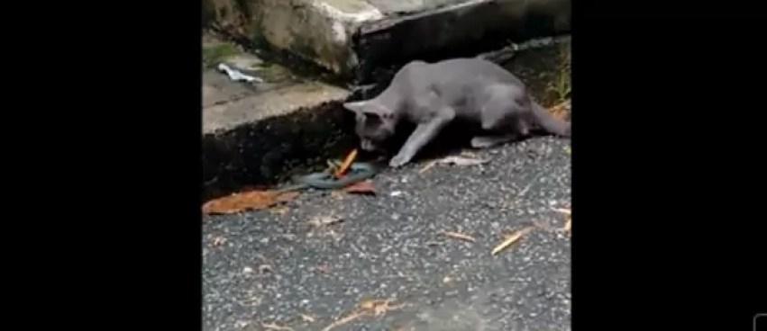 Gato derrota cobra em 'briga de rua' na Colômbia (Foto: Reprodução/YouTube)