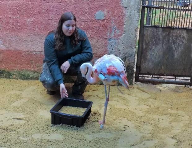 Vanessa encontrou o animal ferido (Foto: Tássia Lima / G1)