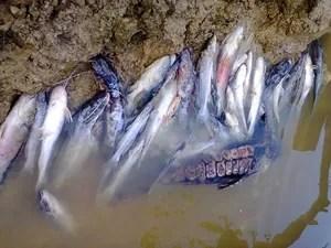 Água contaminada pode ter matado peixes (Foto: Vanísia Nery/G1)