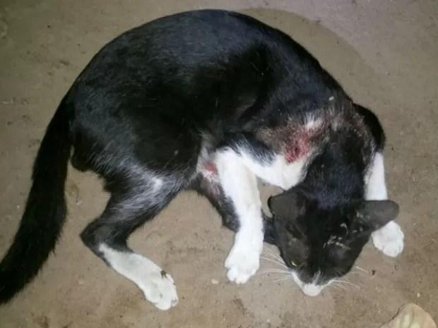 O gato teria sido morto com um tiro de uma espingarda calibre 32, em Araguatins (Foto: Divulgação/PM TO)