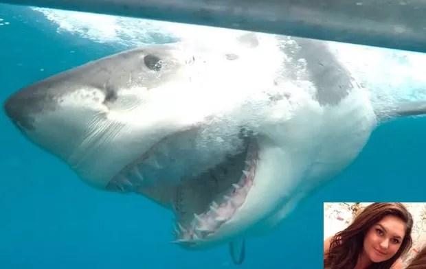 Hollie Finnegan fez foto incrível de grande tubarão branco na Austrália  (Foto: Reprodução/Twitter/Hollie Finnegan)