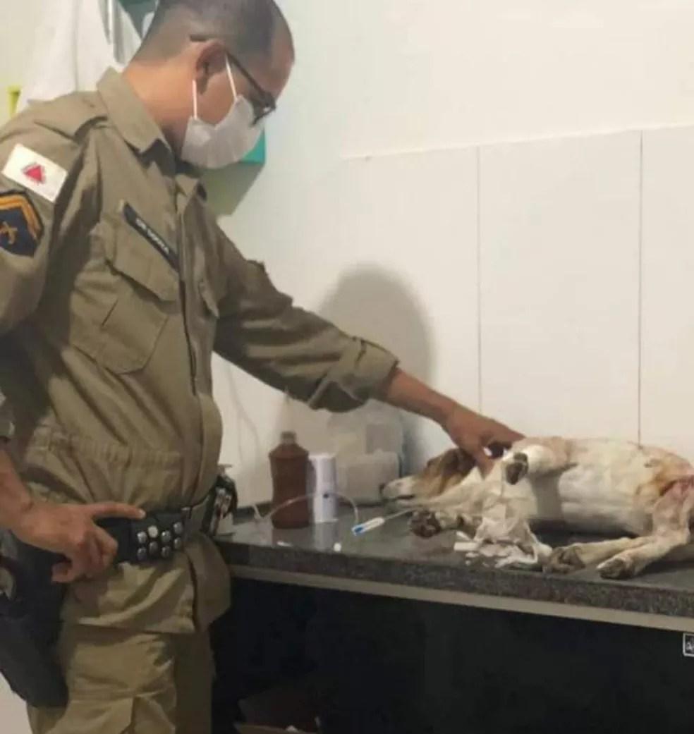 Cão foi socorrido por PM e levado para uma clínica em Montes Claros — Foto: Arquivo pessoal