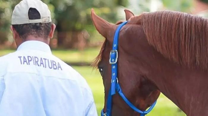 Fazenda Tapiratuba, em Morro Agudo, seleciona cavalos mangalarga há mais de um século — Foto: Divulgação/Fazenda Tapiratuba