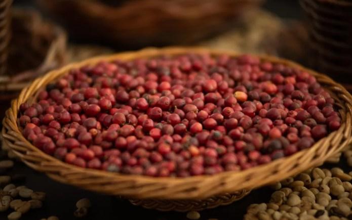 Produção de café deve ajudar no resultado positivo da agropecuária em 2020 — Foto: Érico Andrade/G1