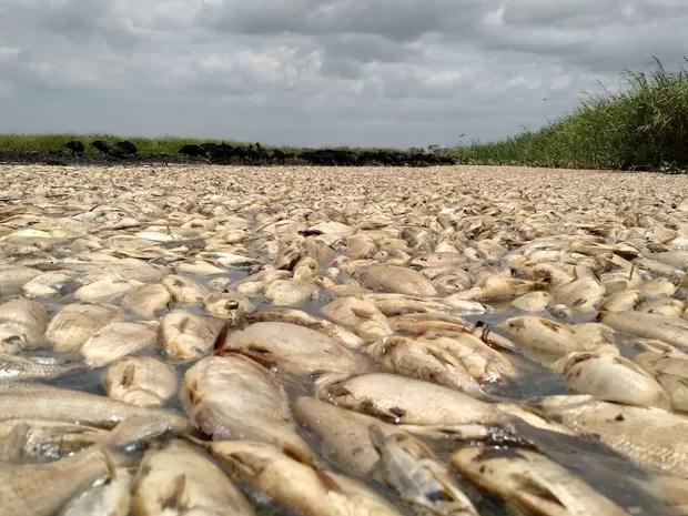 Sem água, peixes morrem em lagoa de Linhares, no Espírito Santo (Foto: Kaio Henrique/ TV Gazeta)