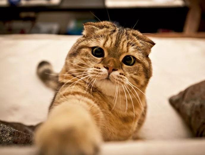 Um olho no prato, outro no gato: GPS rastreia felinos (Foto: Revista Galileu)