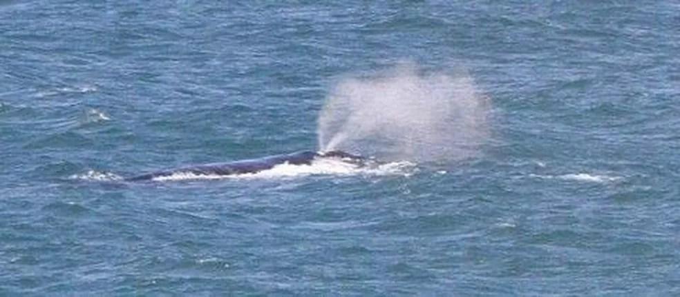 Temporada da baleia-franca vai de julho a novembro em SC (Foto: Instituto Baleia Franca )